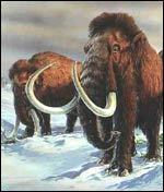 Mammoths, Natural History Museum
