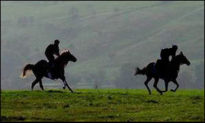 Race horses work out on the gallops