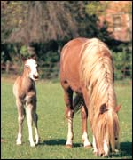 Foals (Photo courtesy of Animal Health Trust)