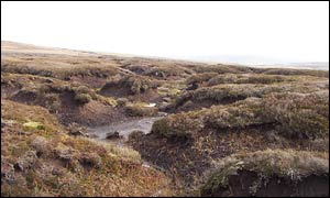Peat bog near the centre of Britain