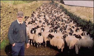 Geoff Walker and sheep on Brennand Farm