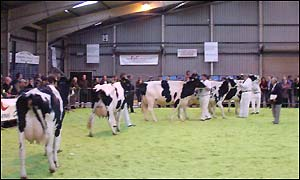 Welsh Dairy Event