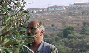 Palestinian olive grower near the Jewish settlement of Tapuach