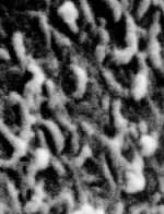 Nannobacteria seen in the Mars rock