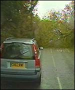 Fallen tree in road