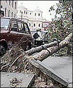 Uprooted tree on The Strand