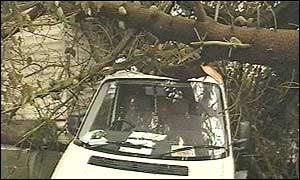 A van crushed by a tree