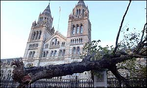 A tree crashes into railings outside the Natural History Museum in London