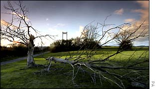 Tree lays on ground at Severn Bridge near Bristol