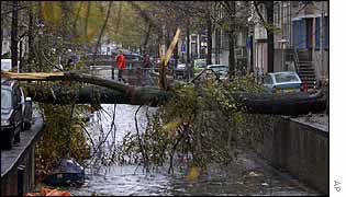 An uprooted tree lies over one of Amsterdam's canals