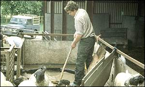 Farmer dipping sheep