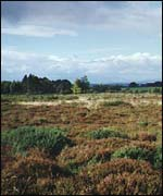 The battlefield at Culloden