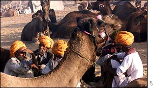 Traders at Pushkar camel fair