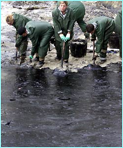 Naval cadets shovel oil off the beach