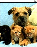 Dog with three kittens