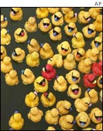 Competing ducks