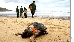 Dead turtle on Spanish beach