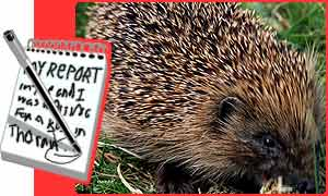 Thousands of hedgehogs are going to be killed