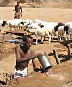 A herdsman digs water for his animals