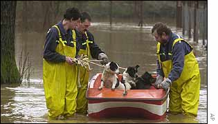 Dogs are rescued in West Bohemia