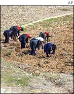 Women working the land in North Korea
