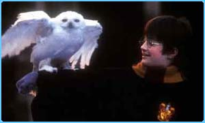 Harry Potter with his pet owl Hedwig