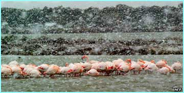 Pink and white! These poor French flamingoes not only look cold, they're colour clashing as well!