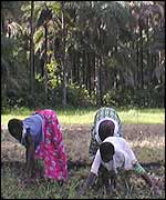 Working in a rice field in Casamance