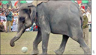 An elephant plays football at the festival