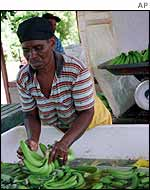 Bananas being sorted in Jamaica