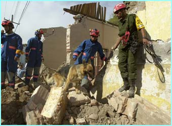 Sniffer dogs search for survivors. At least 26 people have been killed, and 400 injured