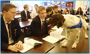 A sniffer dog in a classroom