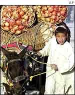 Boy, donkey cart with pomegranates   AP