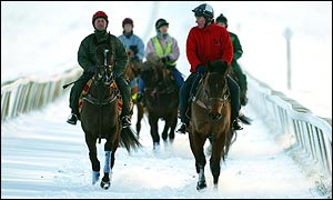 Horses on the  Newmarket gallops