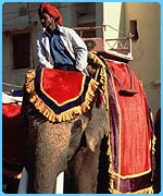 India has about 5,000 domesticated elephants