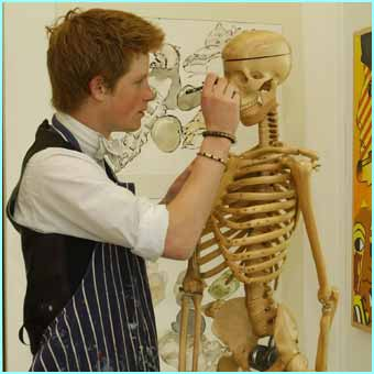 Prince Harry is a keen artist and uses Eton Colleges Drawing School, which has wooden skeletons to help draw humans better