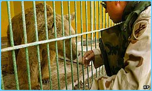 A sick bear being looked after in Baghdad zoo