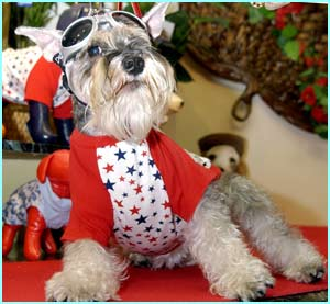 Jasmine, a Schnauser looks pretty cool in this suit!