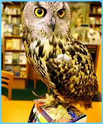 Owls and snakes have appeared at lots of bookshops