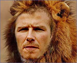 Lion Beckham on the prowl!