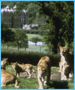 Marmite lives at the famous Longleat Safari Park in Wiltshire