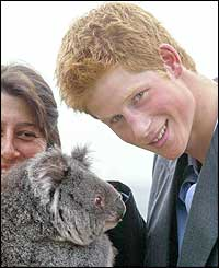 Prince Harry pampers a koala at the zoo
