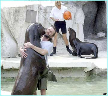 Californian sea-lions have a good kick around under the sun in a Budapest Zoo