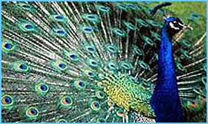 A peacock was among the creatures taken