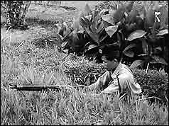 Soldier with rifle hiding in long grass