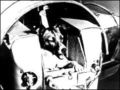 Laika, the Russian space dog in her capsule
