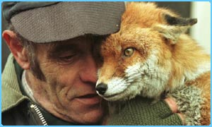 Foxes are still being hunted