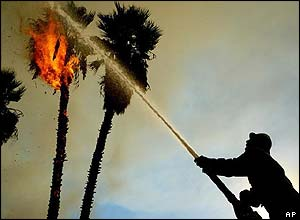 Extinguishing fire in a palm tree in Burbank, California