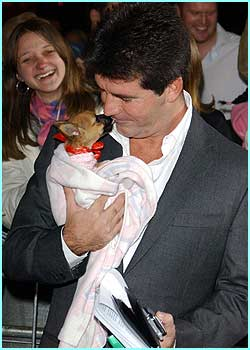 Simon Cowell with a right little cutie - a Chihuahua that came from the audience!