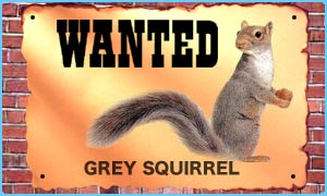 Police are hunting for a grey squirrel